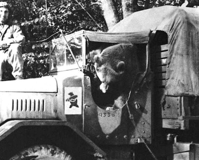 Niedźwiedź Wojtek, adoptowany przez żołnierzy Andersa. Według opowieści żołnierzy, w czasie bitwy o Monte Cassino Wojtek pomagał im w noszeniu skrzyń z amunicją Wojtek był maskotką II Korpusu, nadano mu nawet stopień kaprala.